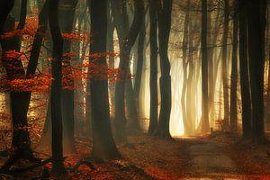 Rode herfst van Rigo Meens
