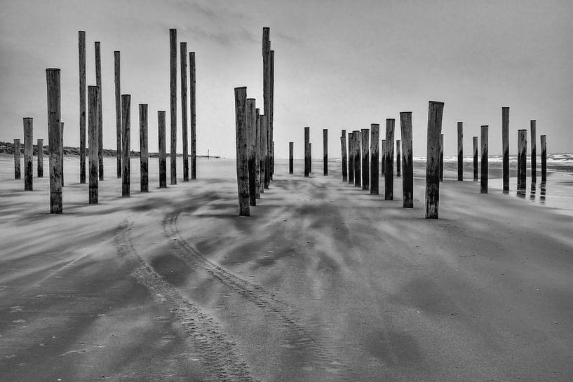 Palendorp Petten in de wind van Mirjam Boerhoop - Oudenaarden