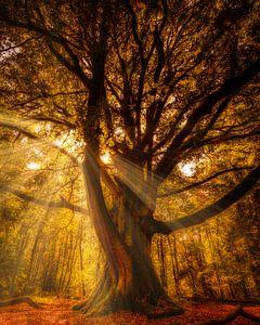 Herfst in nederland van Richard van der Zwan