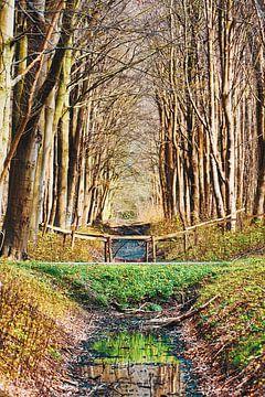 Magisch bos van Wendy Tellier - Vastenhouw