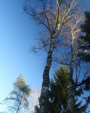 Winterlucht sur Sanne Compeer