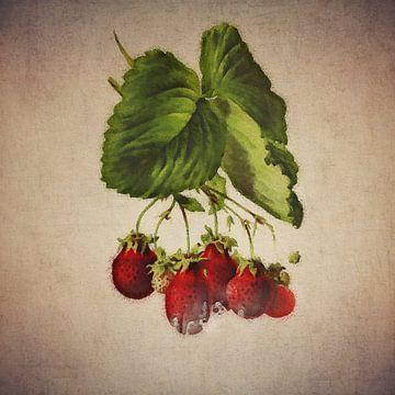 Aardbeien - Antieke tekening van aardbeien van Jan Keteleer