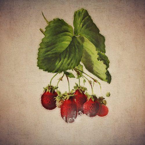 Fraises - Dessin antique de fraises sur