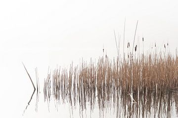 Haarlemmermeerse Bos