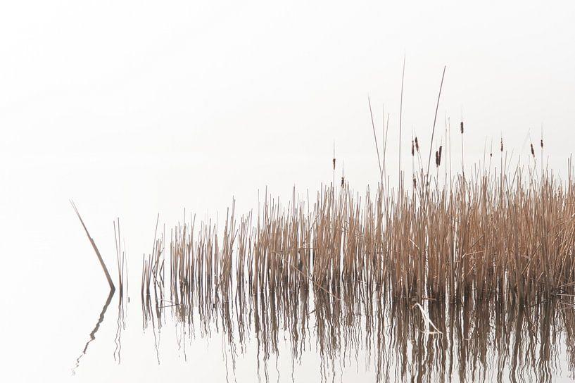 Haarlemmermeer-Wald von Wim Slootweg