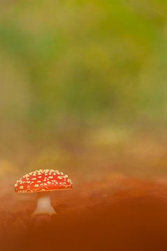 Mushroom sur Douwe Schut