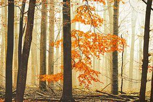 De Oranje Bos Renner van Lars van de Goor