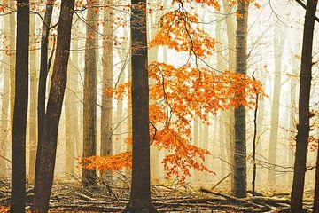 Der Orangenwald-Reiter von Lars van de Goor