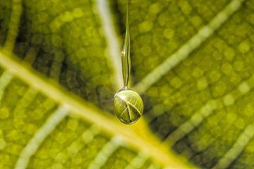 Grape Leaf in a drop van Focco van Eek