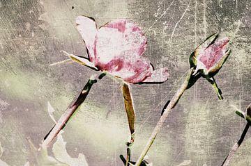 Rosen von Christine Nöhmeier
