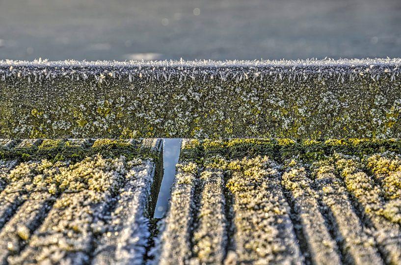 Rijp, mos en hout van Frans Blok