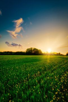 De zon gaat onder achter een koolzaadveld van Jaimy Leemburg