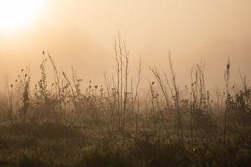 Gräser im Nebel von Tania Perneel