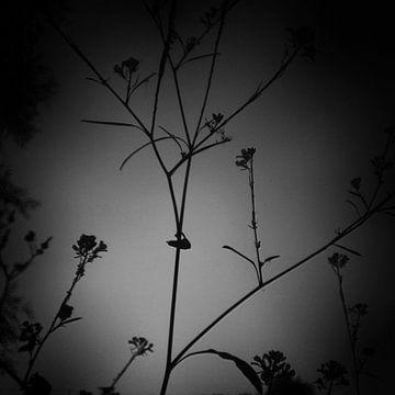 twiggy 01 von poetic snapshots