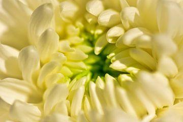 Die Schönheit einer Blume von Suzan (Suus) Buskes
