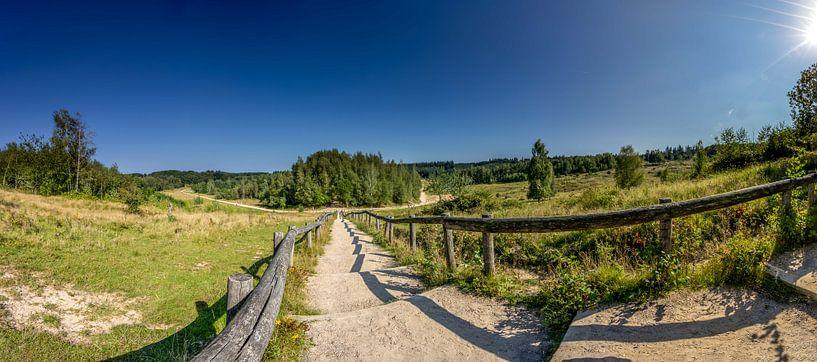 De trap in natuurgebied Kwintelooyen tussen Rhenen en Veenendaal van Jacques Jullens