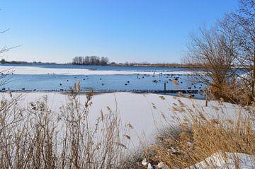 Verscheidenheid aan watervogels tijdens winter van Greta Lipman