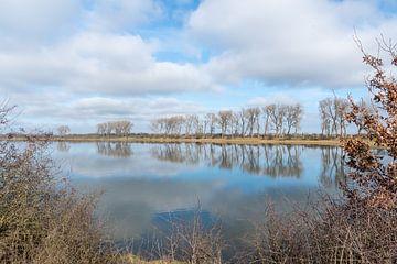 rij bomen in de Ooijpolder van Merijn Loch
