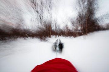 Husky slee door besneeuwd bos