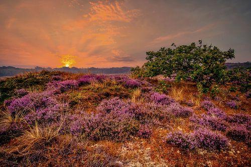 Sphères violettes sur Peter Heins
