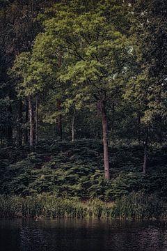 Donker bos aan de waterkant van Fotografie Jeronimo