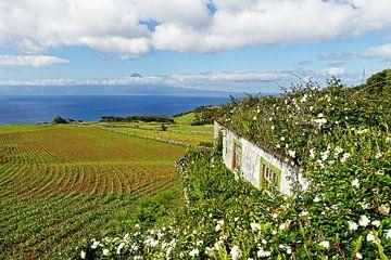 Azoren - Huis met bloemen en uitzicht op het eiland
