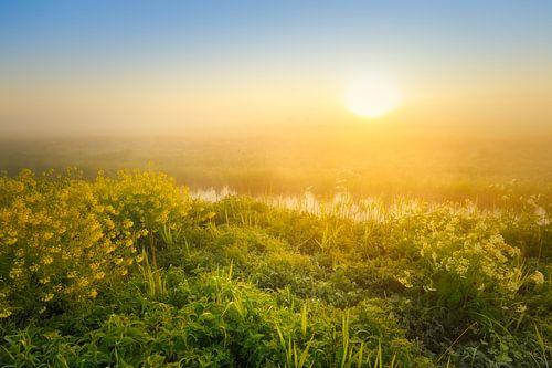 Zonsopkomst boven de Wieden  op een mooie mistige lente ochtend.