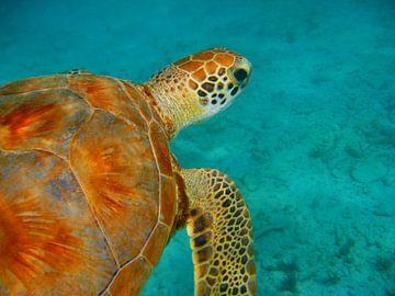 Zeeschildpad von Victor Droogh