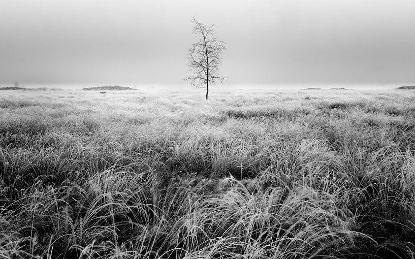 Baum in der Balloërveld von Patrick Snitjer