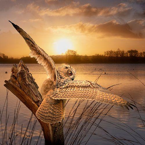 Een Oehoe met gespreide vleugels op een boomstronk tijdens de gouden zonsopkomst