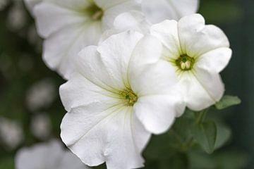 Bloemen in onze tuin von Rijk van de Kaa