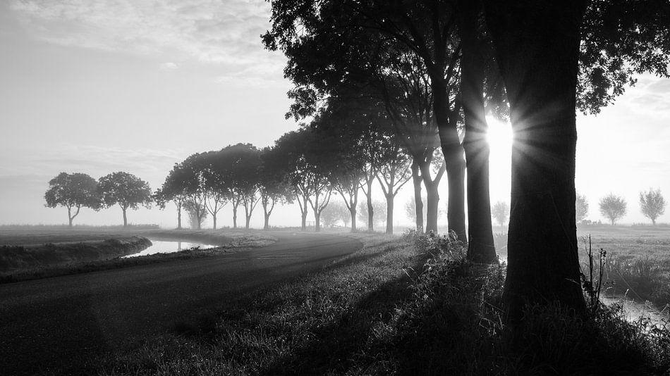 Mistige zonsopgang in de polder