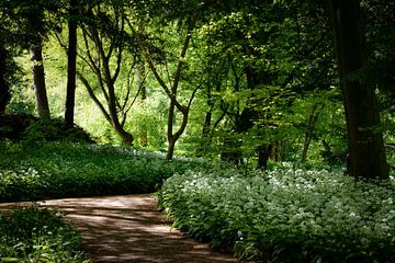 Badgerchives im Amsterdamer Wald von Merel Pape Photography
