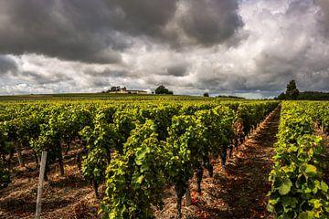 Wijngaard Bordeaux  von Thomas Paardekooper