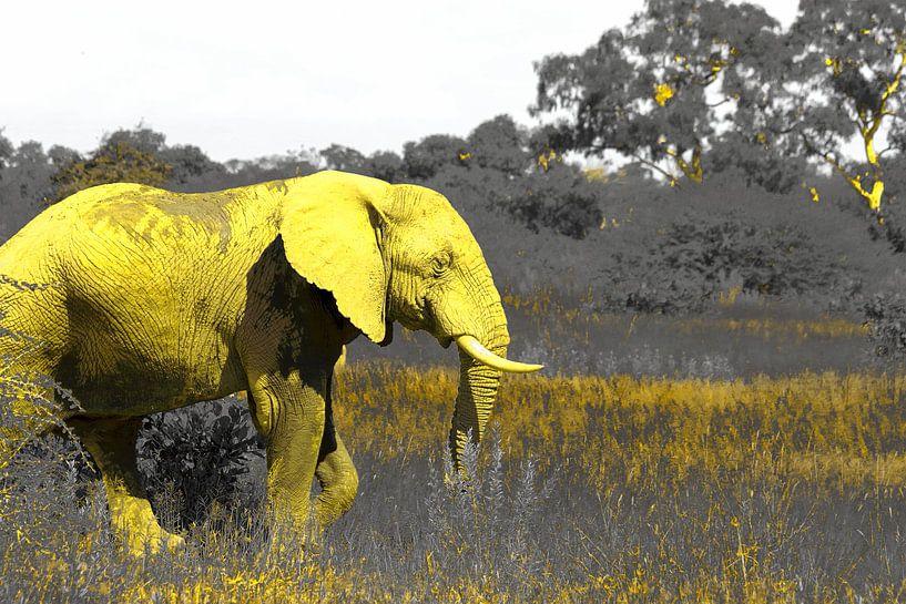 De gele Afrikaanse olifant wildlife natuur kunst van Bobsphotography