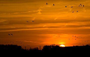 Vögel in der Morgensonne 2 von joyce kool