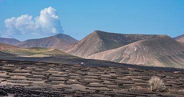 Lanzarote landschap met de wijngaarden van La Geria op de voorgrond.  von Harrie Muis
