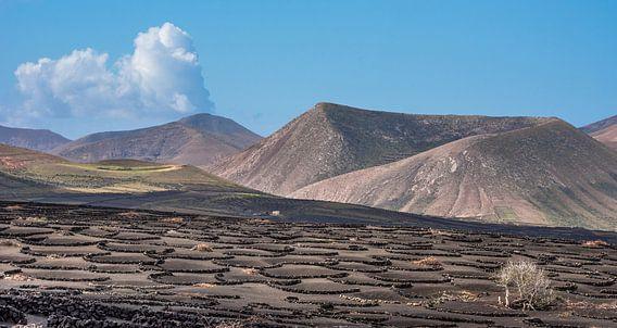 Lanzarote landschap met de wijngaarden van La Geria op de voorgrond.  van Harrie Muis