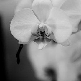 Orchidee - Kus me van Mariska van Vondelen