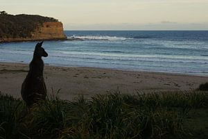 Zonsondergang in Australië van Desiree Francke