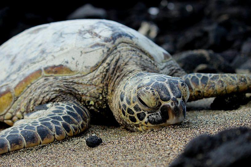 Zeeschildpad van GoWildGoNaturepictures