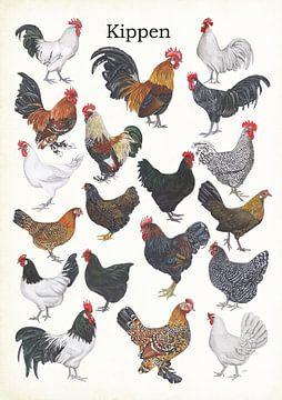 Hühner von Jasper de Ruiter