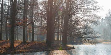 Bosmeertje in Kroondomein Het Loo sur Evert Jan Kip