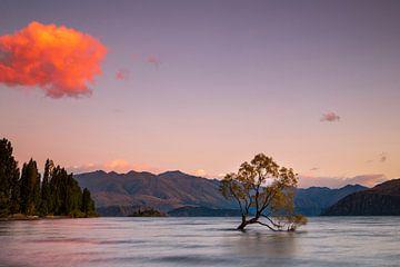 Der Wanaka-Baum von Antwan Janssen