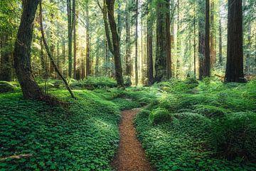 The Grieg-French-Bell Trail van Joris Pannemans - Loris Photography
