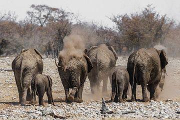 Elefanten Familie sur Felix Brönnimann