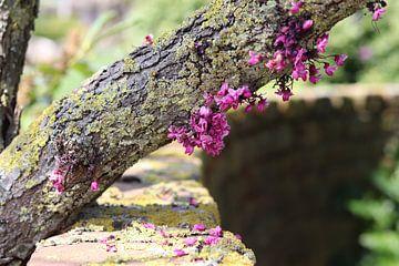 Baumrinde mit Moos und rosa Blüten im Sonnenlicht von Jacqueline Holman