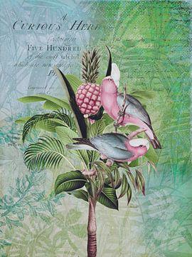 Tropenvögel von Andrea Haase