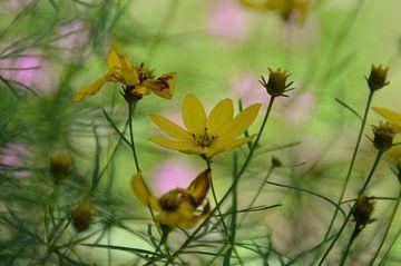 wirwar met gele bloemen van Pascal Engelbarts