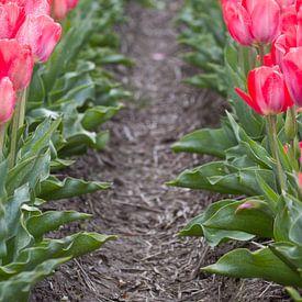 Tulpen in bloei van Edwin Nagel